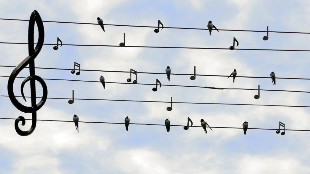 Birds and Music Sound