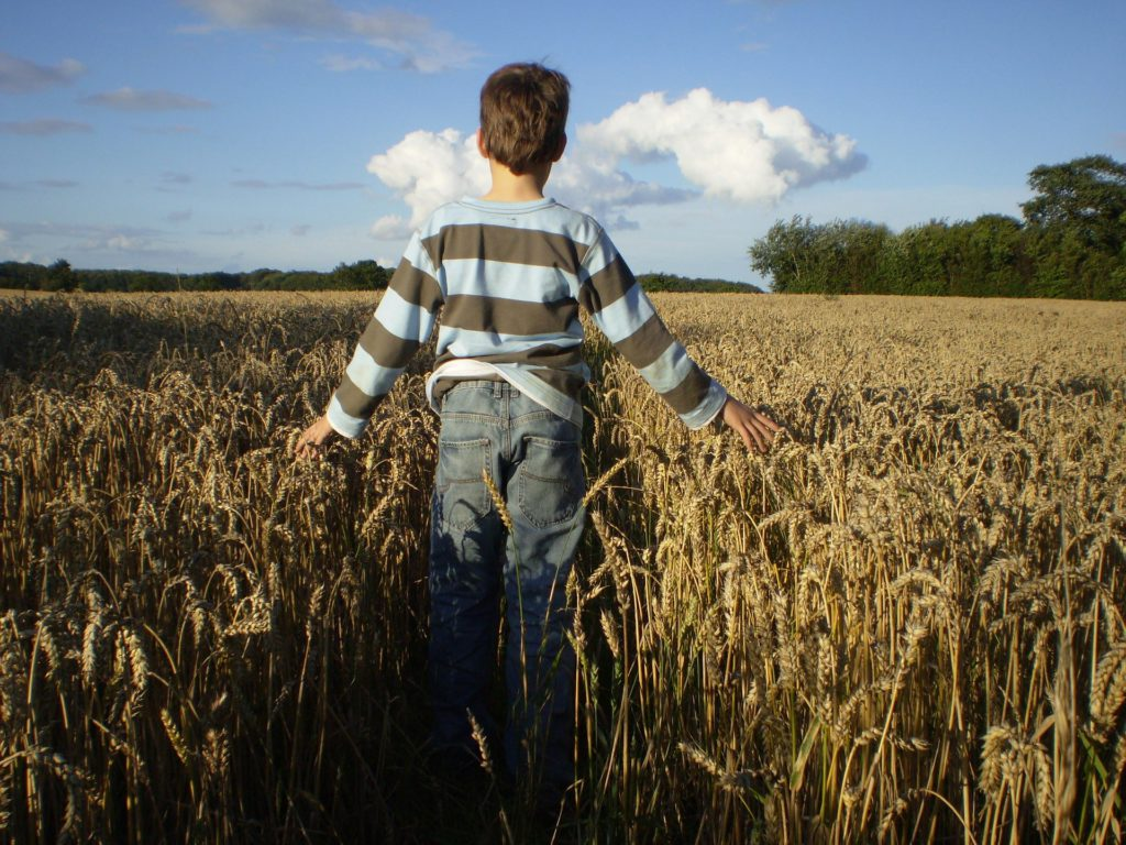 Child is in the Middle of Harvest Field
