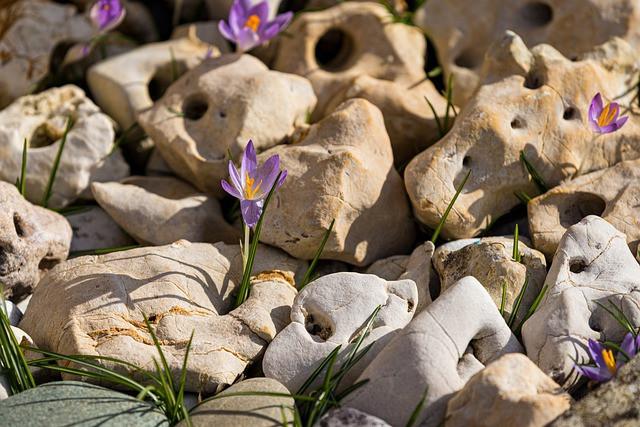 Flowers Grow Through Stones
