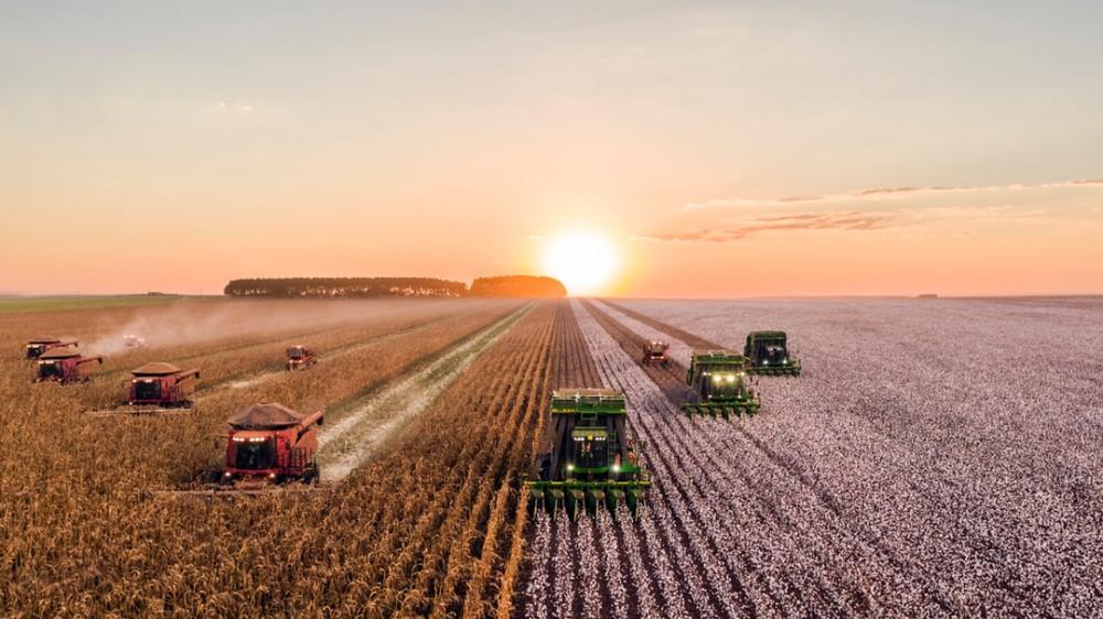 Combine Harvesters During Harvest