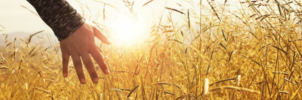 Person on Wheat Field