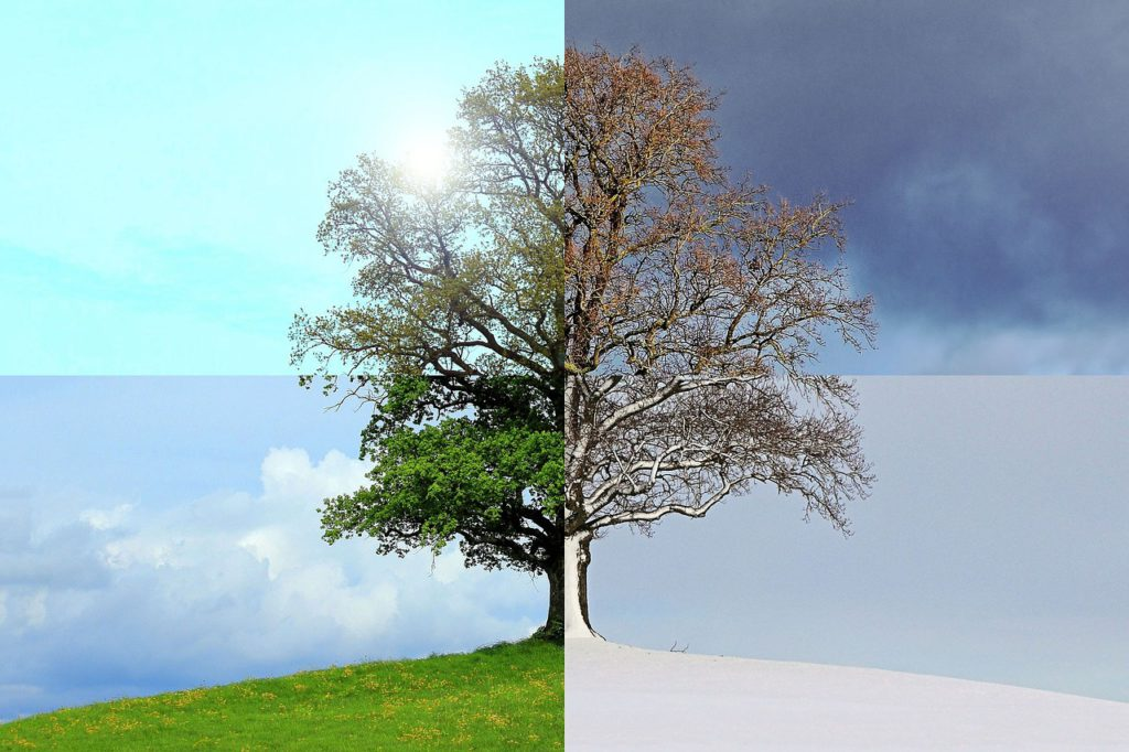 Seasons of the Year - Tree and Four Seasons