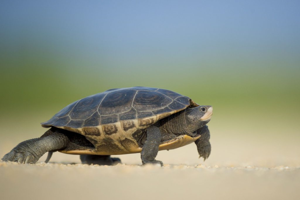 Turtle - Small Step